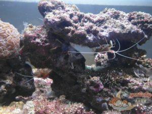 Xpark珊瑚潛行