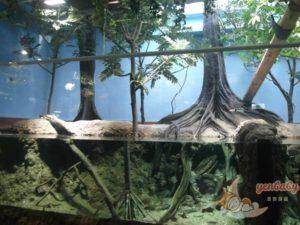 Xpark雨林探險