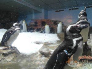 Xpark企鵝奇遇