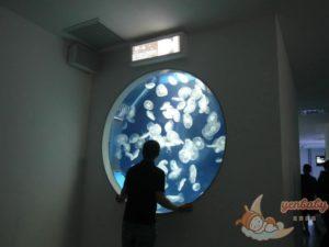 Xpark遇見水母